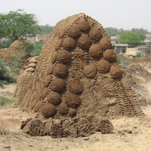 dung cakes pile